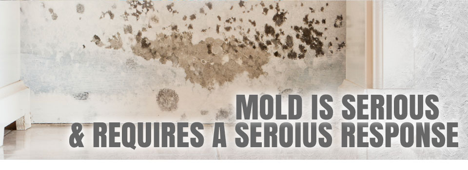 Mold Is Serious & Requires A Serious Response